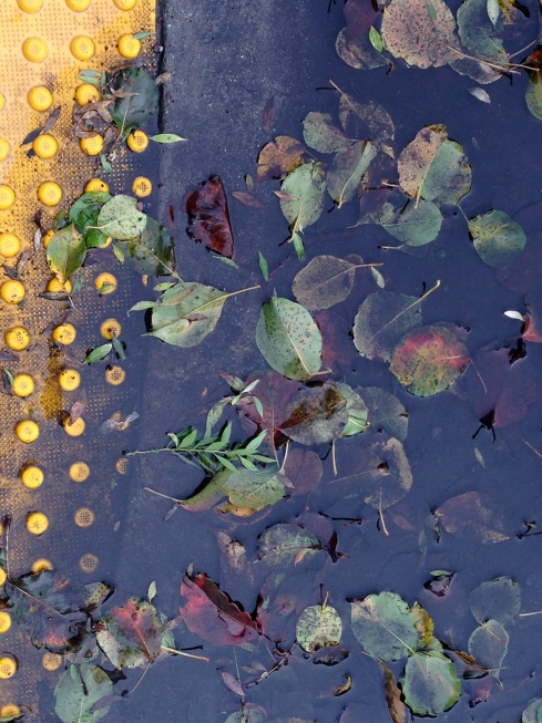 leaves_water_curb02.jpg